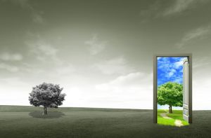 11568818 - door open on green field for environmental concept and idea